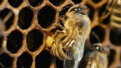 a méhek világa 1