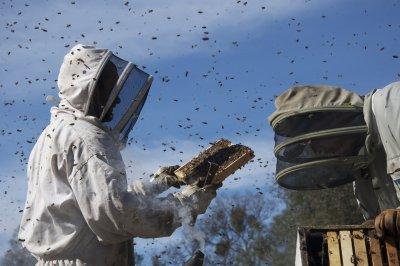 a méhek világa 2